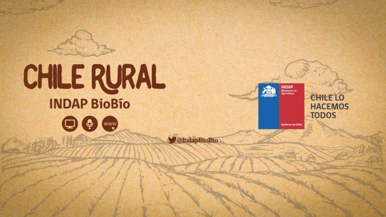 INDAP Bío Bío – Programa Radio Chile Rural