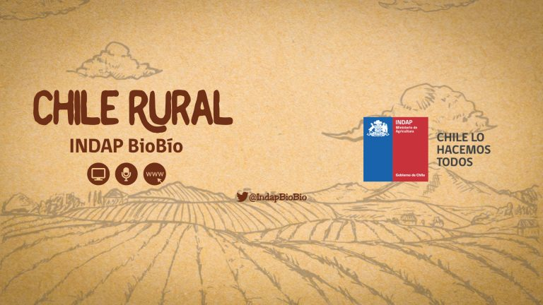 INDAP Bío Bío – Programa Radio Chile Rural – Cobertura audiovisual