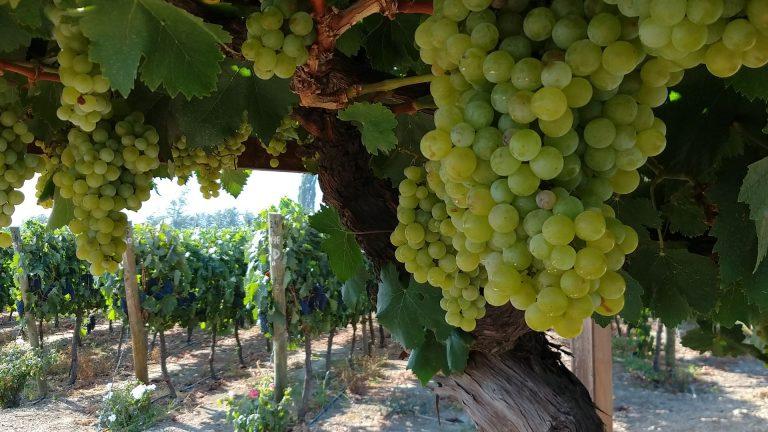 Bodegas de Triana, una nueva ruta del vino para Chile.